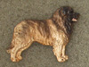 Leonberger - Pin Figure