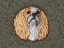 Cavalier King Charles Spaniel - Pin Head