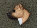 American Staffordshire Terrier - Pin Head