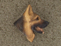 German Shepherd - Pin Head