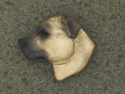 Staffordshire Bullterrier - Pin Head