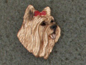 Yorkshire Terrier - Pin Head